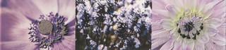Maxima violet lišta 2 44,8x10