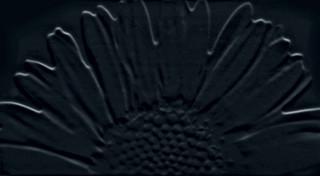 Colour black sunflower inzerto 59,3x32,7