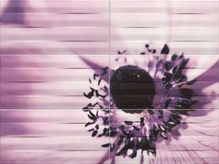 Maxima violet 2 inzerto 89,8x67,3