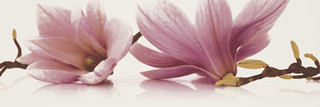 Abrila inserto kwiat A 20x60
