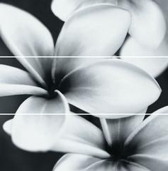 Flower composition 75x75